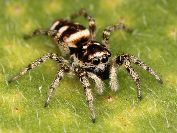 Con số may mắn ứng với giấc mơ thấy nhện