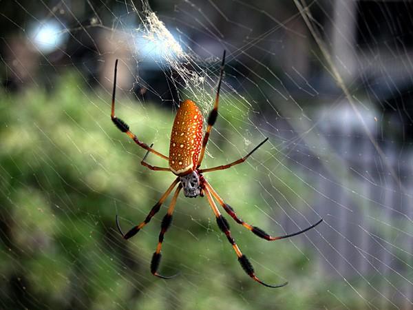 Mơ thấy nhện có ý nghĩa gì