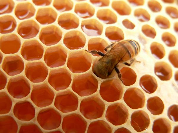 Mơ thấy ong đánh đề con gì