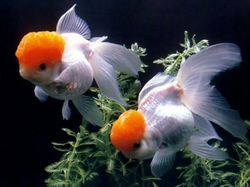Nằm mơ thấy cá có những ý nghĩa điềm báo như thế nào