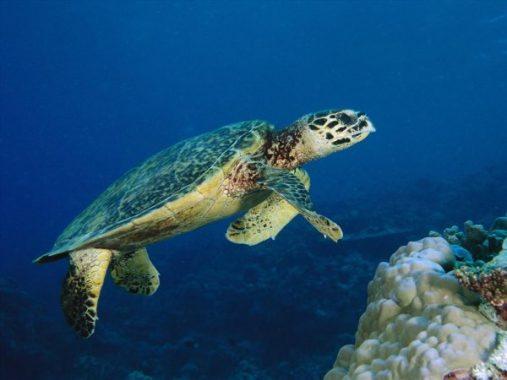 Mơ thấy rùa – Chiêm bao thấy rùa có ý nghĩa điềm báo gì