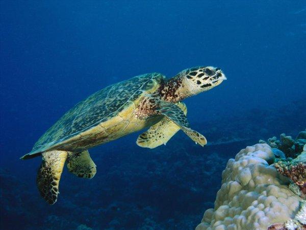 Mơ thấy rùa có ý nghĩa điềm báo gì