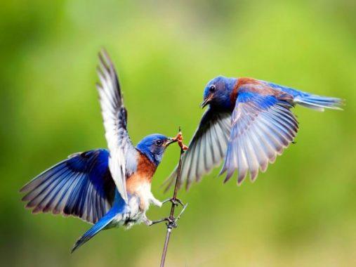 Mơ thấy chim – Nằm mơ thấy chim đánh xổ số lô đề con gì