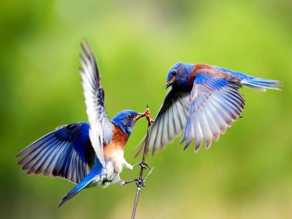Nằm mơ thấy chim đánh xổ số lô đề con gì
