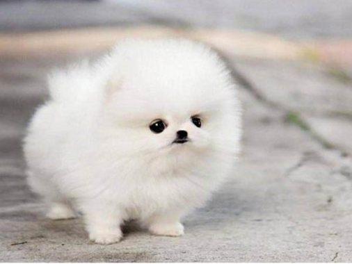 Mơ thấy chó con – Giải mã con số lô đề của giấc mơ thấy chó con