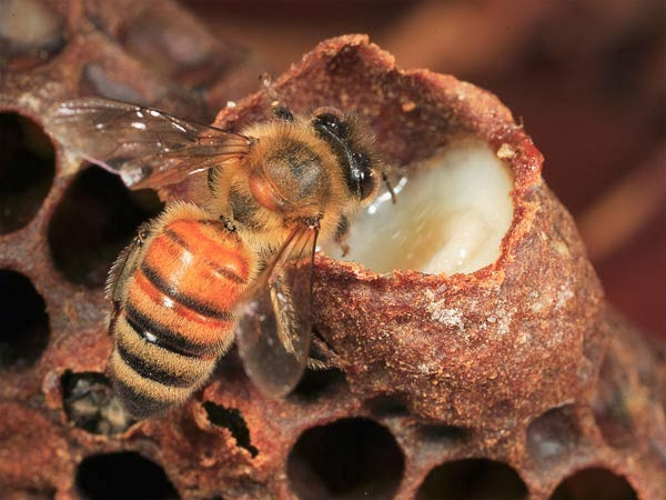 Ý nghĩa và con số lô tô của giấc mơ thấy ong
