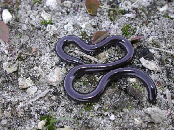 Giải mã ý nghĩa của giấc mơ thấy rắn đen