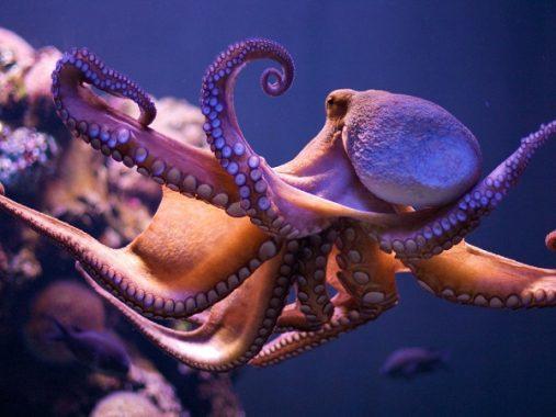 Chiêm bao thấy bạch tuộc điềm báo gì và nên đánh con số nào
