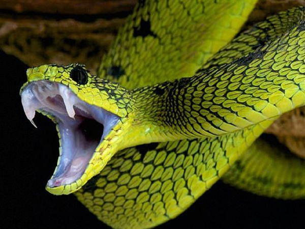 Mơ thấy rắn là điềm gì, tốt hay xấu - Rắn là số mấy?