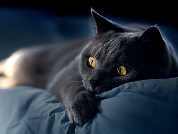 Mơ thấy mèo đen là điềm báo gì, mèo đen là số mấy?