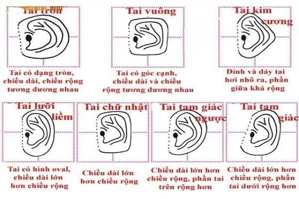 Xem tướng tai qua hình dáng đôi tai