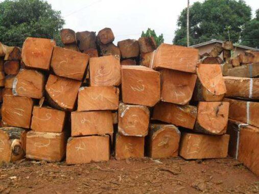 Nằm mơ thấy gỗ là điềm hên hay xui ? Đánh số đề con gì trúng ?